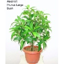 Prunus artificial arbusto (kong do hong)