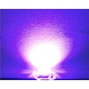 Purple Color LED (Non-UV) (Hong Kong)