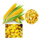 Sweet Corn (China)
