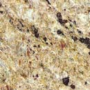 Import Granite, Giallo Brazail (China)